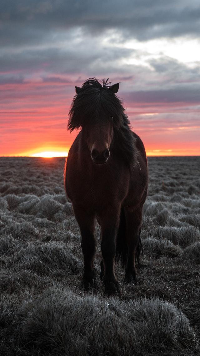Min första häst
